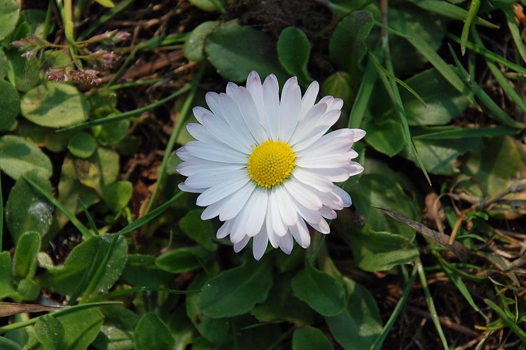 wiosna-4