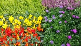 Sadzonki roślin w zamian za odpady – zapraszamy na EKO-ZBIÓRKI
