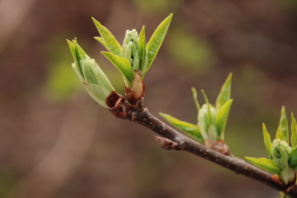 wiosna-2